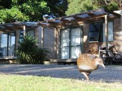 Russell-Orongo Bay Holiday Park | New Zealand Hotels Deals