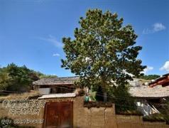 Sol Tree Inn Shangri-La | China Budget Hotels