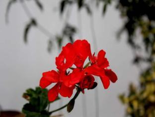 Janmik Holiday Resort Nuwara Eliya - Hotel Garden