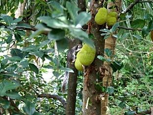 Samans Guest House Sigiriya - Garden