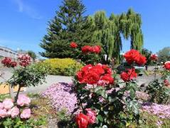 Waiuku Motel | New Zealand Budget Hotels