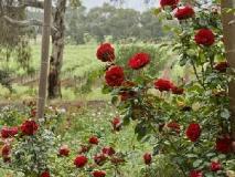 The Residence: garden
