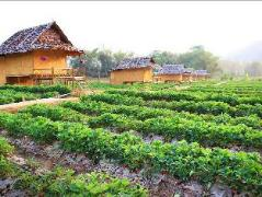 Pai See Tong Strawberry Farm Resort Thailand