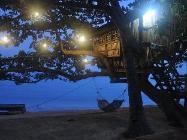 Nhà riêng Tree