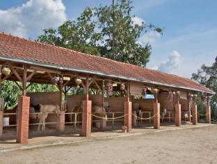 Colmar Tropicale – Berjaya Hills Bentong - Horse Stable