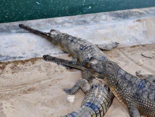 Chitwan Safari Camp & Lodge Chitwan - Crocodile Breeding Center