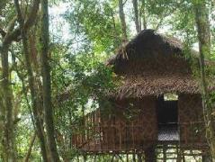 Malaysia Hotels   Terra's Tree House