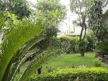 Suryoday Bed & Breakfast: garden