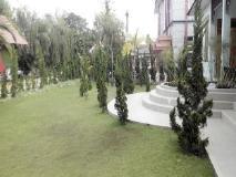 Tiger Hotel: garden