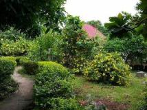 Thavisok Resort: garden