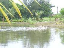 Pinlon Village Hotel & Resorts: view