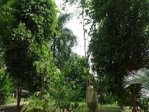 Motel Yaewaddy: garden