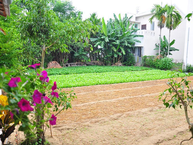 Petunia Garden Homestay and Hostel11