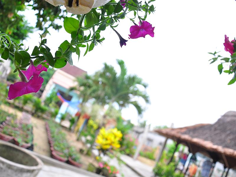 Petunia Garden Homestay and Hostel12