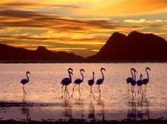 Flamingo Lake Resort - South Africa Discount Hotels
