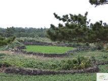 Jeju Hi Guesthouse: view