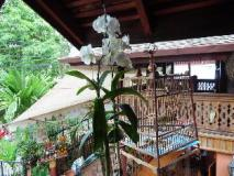 Phonemaly Guesthouse: balcony/terrace