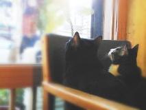 Honnki Ya Hostel: coffee shop/cafe