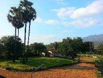 Double Lotus Hotel: garden