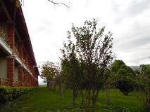 Vansana Plain of Jars Hotel: garden