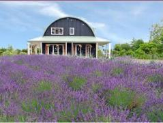 Lavender Hill Luxury Bed and Breakfast New Zealand