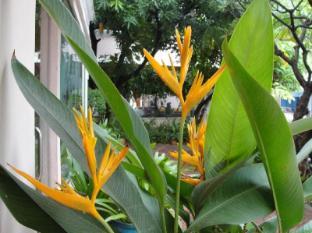 Imperial Garden Villa & Hotel Phnom Penh - View