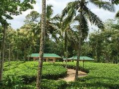 Akkara Dahaya Bungalow | Sri Lanka Budget Hotels