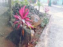 Zay Yar Thein Gi Hotel: garden
