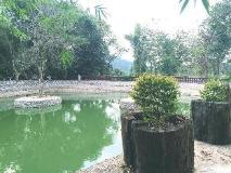 Puna Phaxok Resort: view