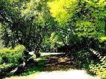 Quarry Estate: garden