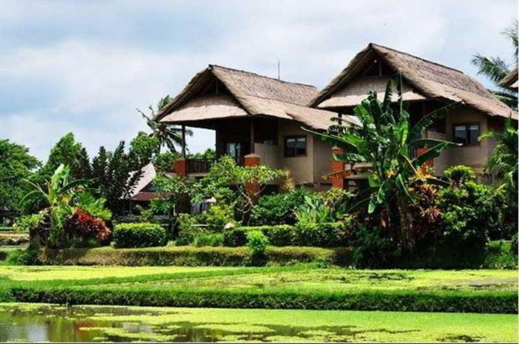 Budget hotels in Ubud, Bali for under 50 USD